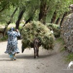 Daily life of Zarafshan Valley, Tajikistan