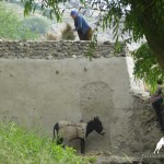 Daily life in Zong Village, Wakhan Valley, Pamir